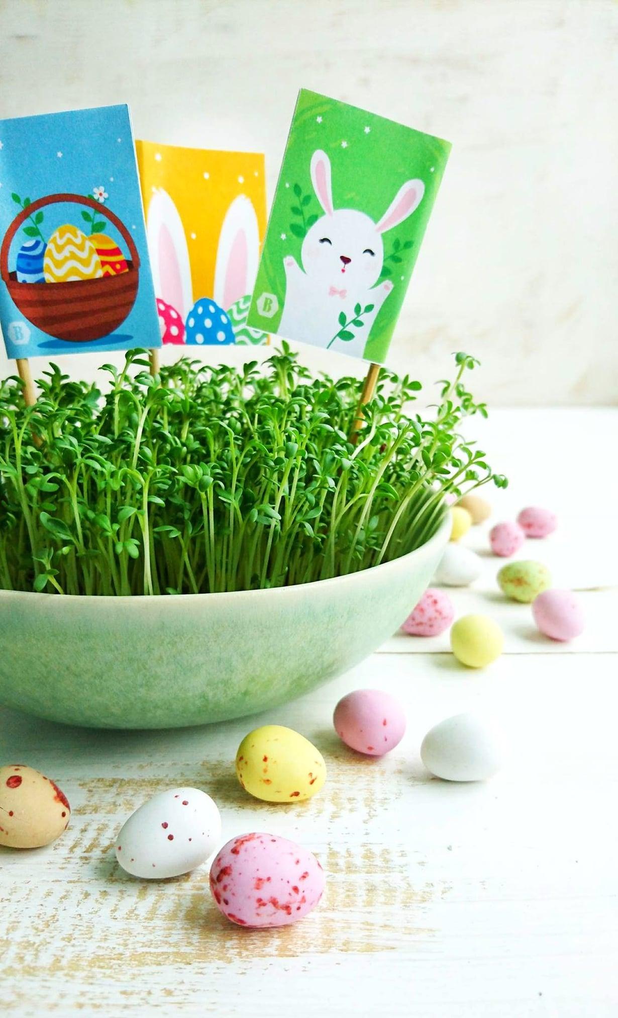 Herkullinen krassiruoho pääsiäisen koristukseksi