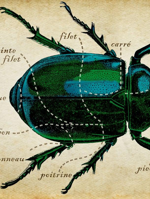 Näin paloitellaan hyönteisen ruho. Kuvitus: Ninna Lindström.